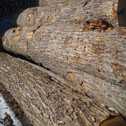 Grey Elm Logs